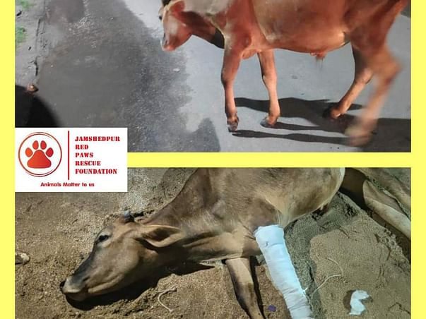 Help us build them a home: Jamshedpur Red Paws Rescue Foundation