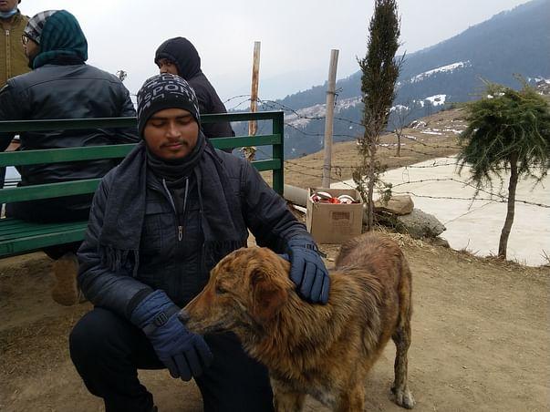 Help Ashish to help stray animals