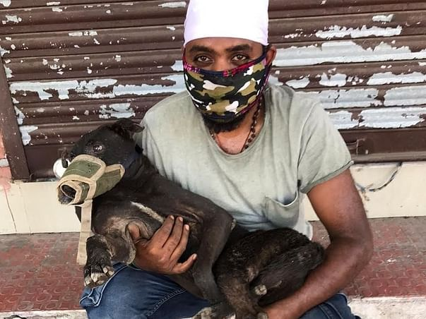Help Sick And Injured Stray Dogs