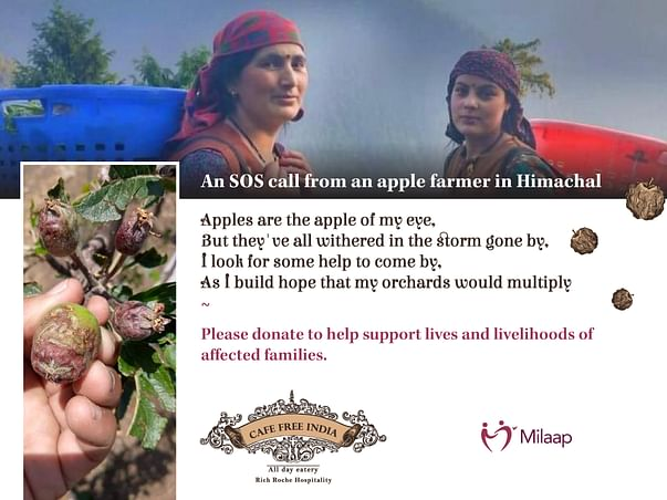 SOS Call to help Apple Farmers in Himachal Pradesh