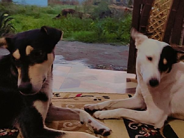 Help Street Animals In Getting Them Food And Medical Treatment
