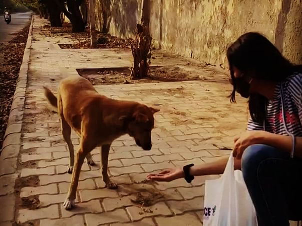 Help Us Feed The Voiceless