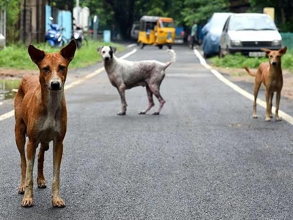 Feed The Street Dogs