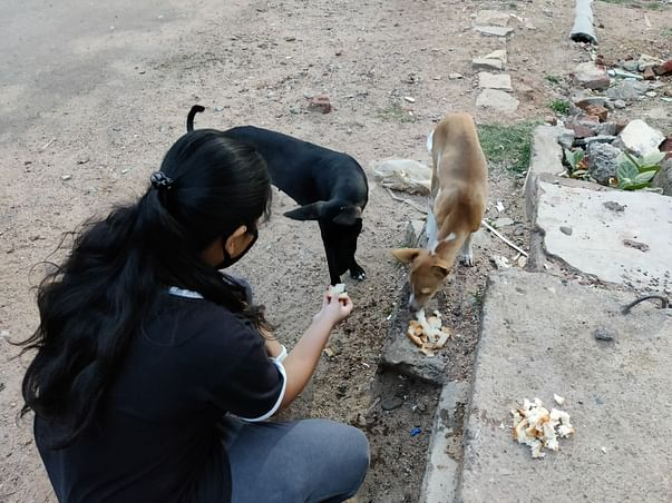 Help Me To Give These Voiceless Souls A Better Life