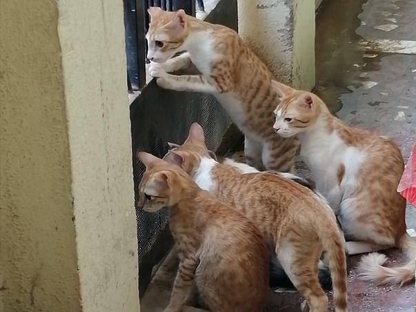 Help Stray Cats