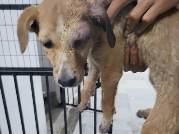 24x7 Ambulance Service For Accidental and ill Stray Dogs For FREE