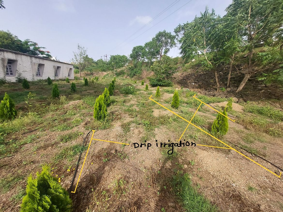 Drip irrigation for planted trees