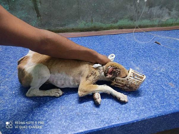 Help 10 Dog's Treatment (Tumor, Maggots, Distamper, Kidney, Fever)