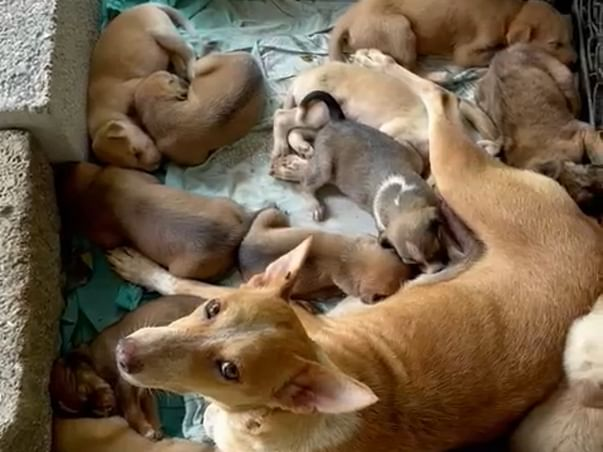 Help these puppies to get vaccinated and neuter the dog mom