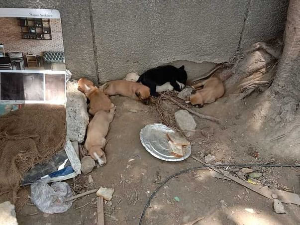 Let's Help The Voiceless