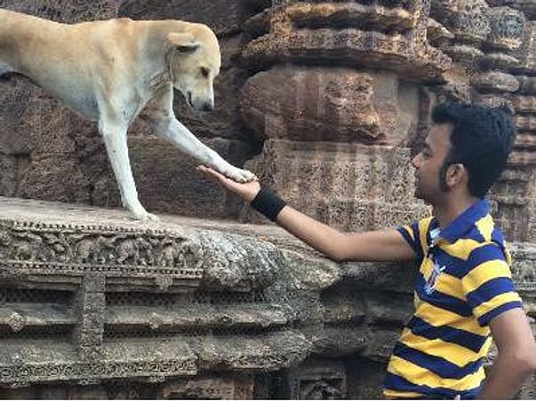 Join Hands With Me To Help As Many Animals In Distress!