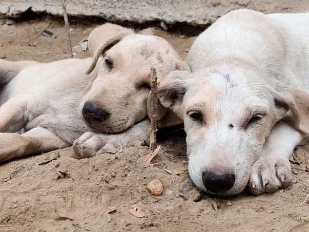 Medical And Regular Care For Street Dogs!