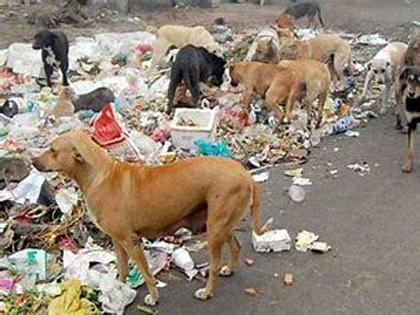 Support Me To Help Stray And Street Animals