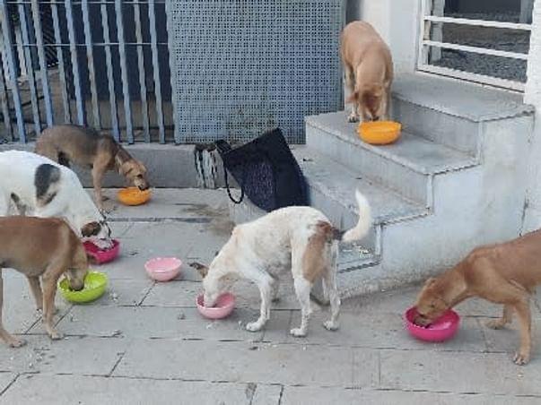 Feed the fur souls