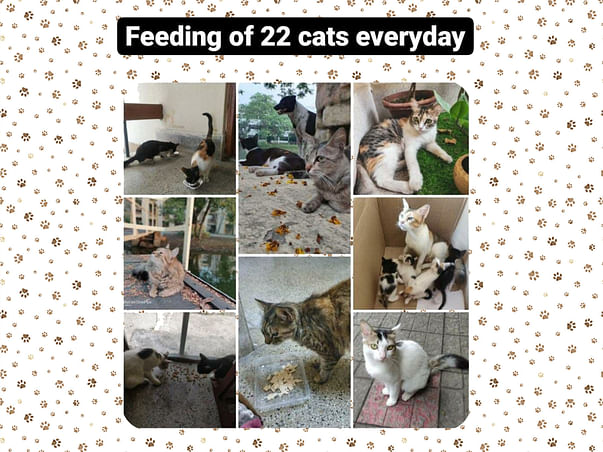 Help our furry friends at IIM Calcutta