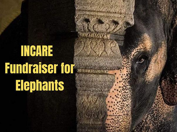 INCARE fundraiser for Elephants!