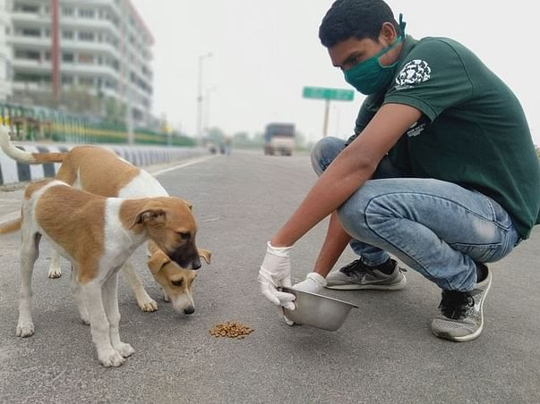 Support For Stray Animals
