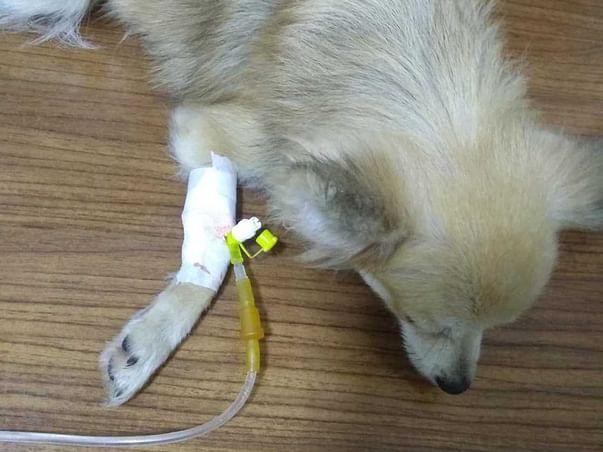 Help MoMo Fight Parvo Virus