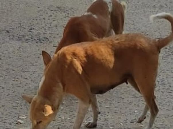 Help To Fight With Hunger.For The People And Stray Animals Who Need Us