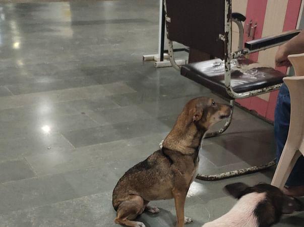 Help NITIE Dogs get food