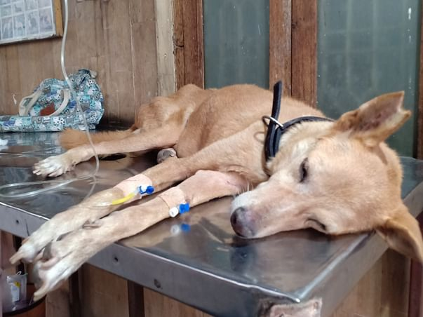 Help Biscuit Recover From Chronic Kidney Disease