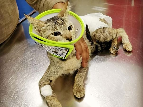 Help a street kitten recover from a life-threatening injury