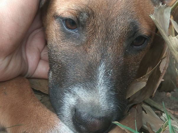 Help Sterilize Stray Dogs To Save Them From Suffering