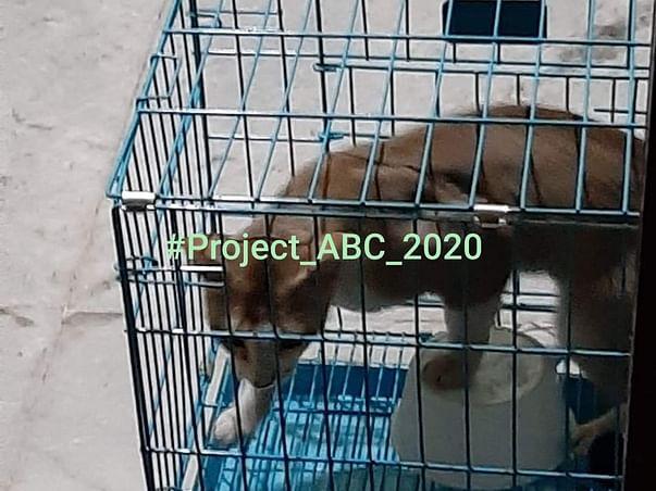 #Project_ABC_2020