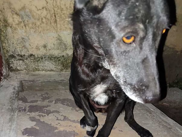 Support To Provide Help For Stray Dogs