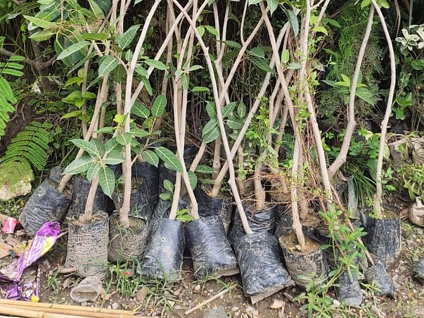 Help Grow Green Area