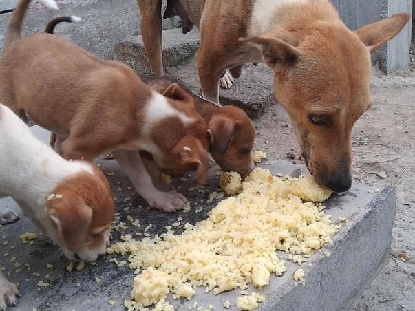 Help Us Feed And Rescue Strays And Needy People