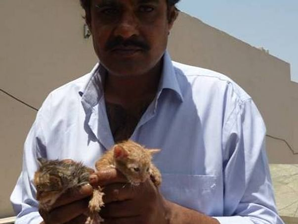 Support Help Suffering Lives Society To Rescue and feed Animals