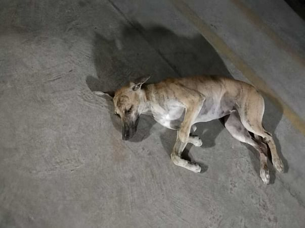 Help Avaak To Provide Medical Aid To This Little Puppy