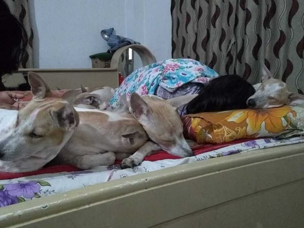 Help To Feed The Stray Dogs