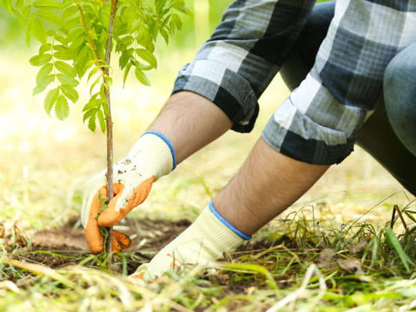 Planting 30,000 Trees To Restore The Lost Green Cover