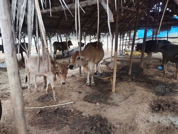 Help Sai Vignesh Build Sheds For Rescued Animals Of The Sanctuary!