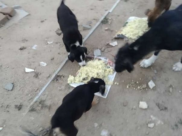 Help feed the stray dogs to keep them alive!