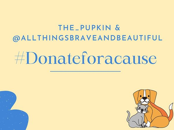 The Pupkin & Allthings Brave And Beautiful Fundraiser