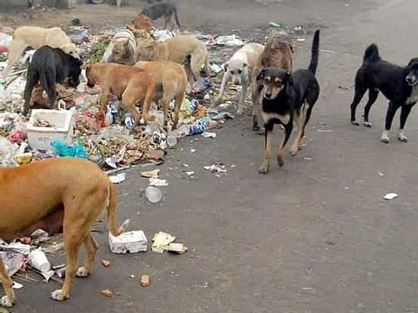 Support Me To Help The Stray And Street Dogs