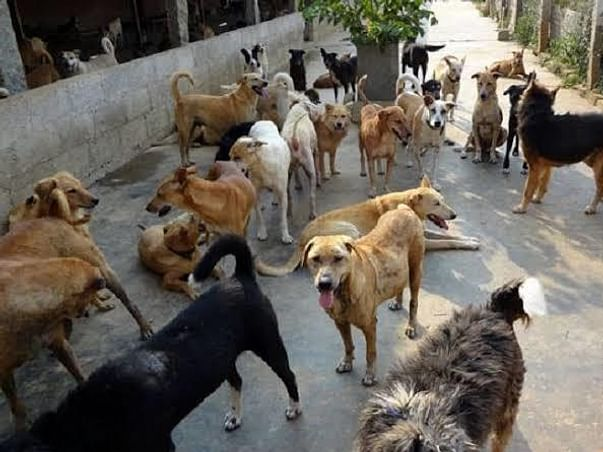 Helping All The Strays We Can Reach Out