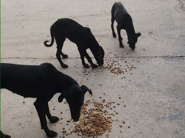 Help H.F.S, Bikaner To FEED THE STRAYS IN August MONTH🤗🐾