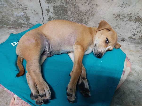 Help this puppy to live his life  once again