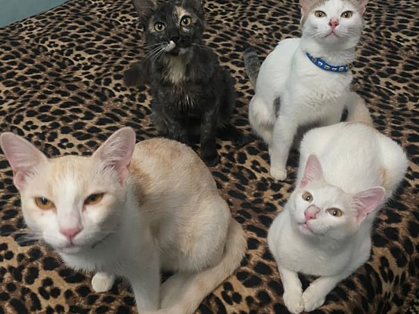 Shelter For Stray Cats And Sterilisation