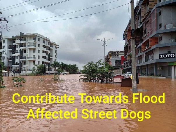 Help Flood Affected Street Dogs