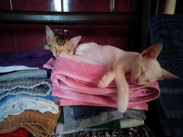 Good Cats Need Good Shelter