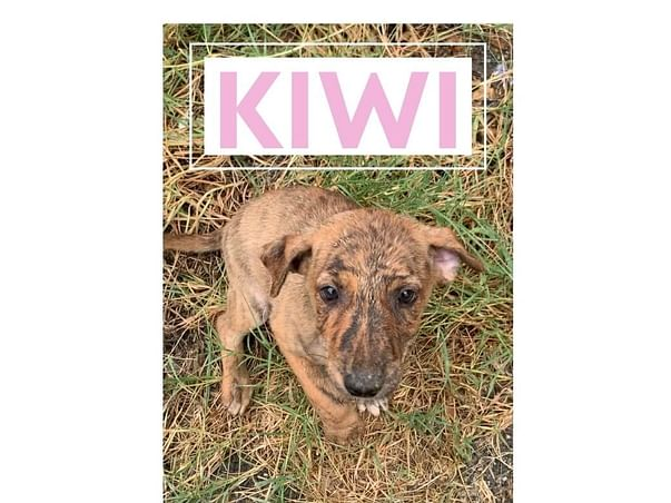 Help Kiwi, Chia and Chip fight Distemper and Tick fever
