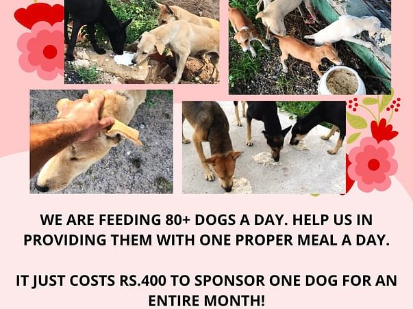 Help Us Raise Funds For The Monthly Feeding Of Our Dogs