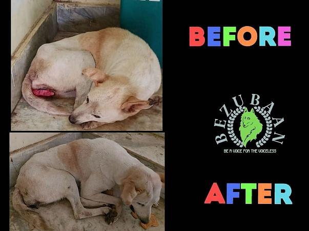 BEZUBAAN Feeding to street dogs & treatment