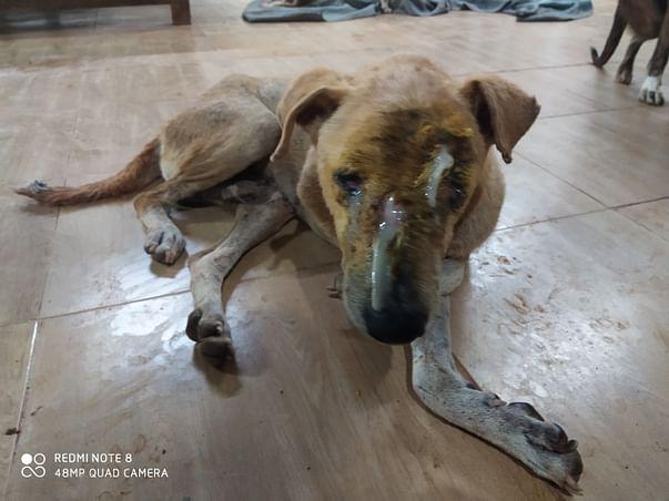 Vatika Dogs Sanctuary