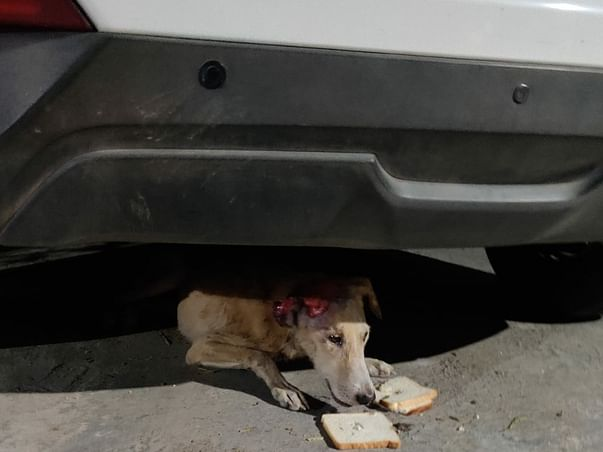 Help Me Feed And Rescue The Stray Animals.